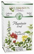 Ethically Wildcrafted Caffeine Free Plantain Leaf Herbal Tea