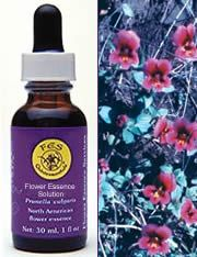 DROPPED: Flower Essence Services - Purple Monkeyflower Flower Essence - 0.25 oz.